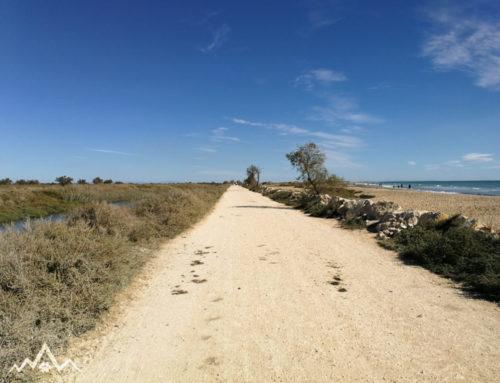 Mit dem Hund durch Sainte-Marie-de-la-Mer und die Camarque