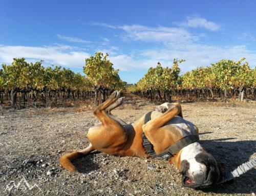 """Das """"pfantastische"""" Jahr eines Nomad-Dogs"""