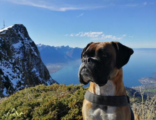Wanderung mit Hund in der Schweiz vom Rochers de Naye nach Haut-de-Ceux